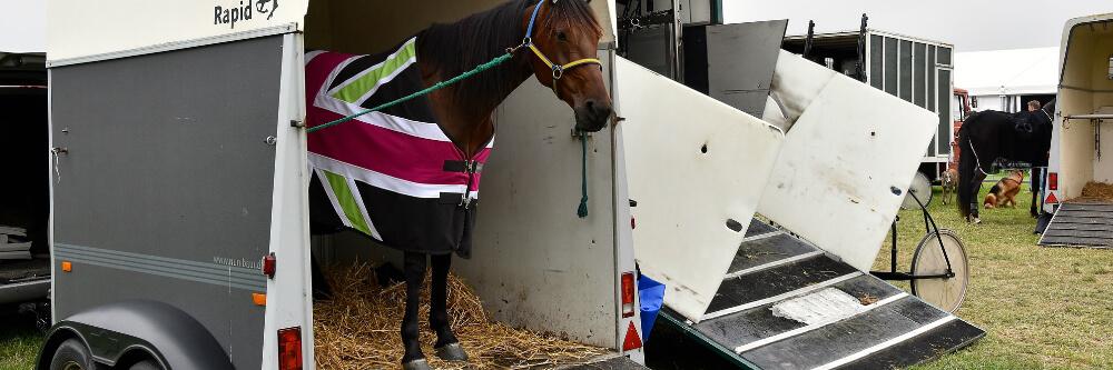 Gasfeder für Pferdeanhänger